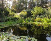 piscina natural cristobal elgueta